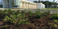 Culinary Institute at HGTC Landscaping by Seed Slingers