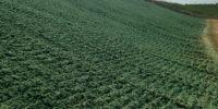 Richland Landfill hyrdoseed Seed Slingers